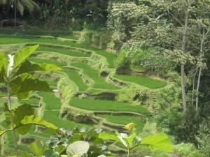 Bali inspirations