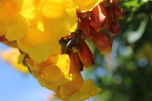 Trumpets and Bees